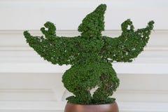 Garuda Bush (pianta) Fotografia Stock Libera da Diritti