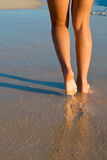 garvade strandben Arkivbild