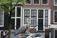 Garza en Amsterdam Fotografía de archivo