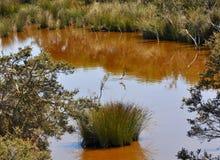 Garza en el lago Coogee, Australia occidental Imagen de archivo libre de regalías