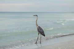 Garza en el océano foto de archivo libre de regalías