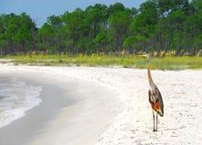 Garza en la costa Imagen de archivo libre de regalías