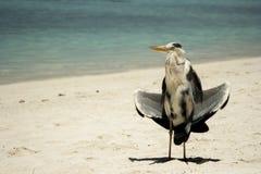 Garza en la playa Fotos de archivo