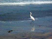 Garza en la playa Fotografía de archivo libre de regalías