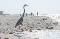 Garza en la playa amenazante petróleo Foto de archivo libre de regalías
