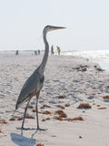 Garza en la playa amenazante petróleo Fotos de archivo libres de regalías