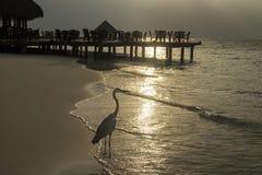 Garza en la playa en la puesta del sol Imágenes de archivo libres de regalías