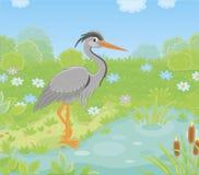Garza gris por un pequeño lago ilustración del vector