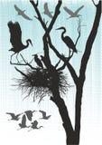 Garzas y gansos Imagen de archivo libre de regalías