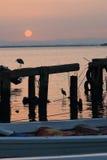 Garzas y salida del sol Imagen de archivo libre de regalías