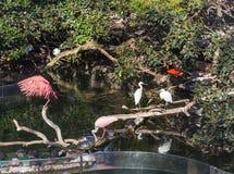 Garzas y tortugas blancas y rosadas en el parque de la ciudad en Valencia, España foto de archivo