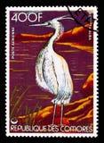 Garzetta dell'egretta dell'egretta, serie degli uccelli, circa 1978 Fotografia Stock Libera da Diritti