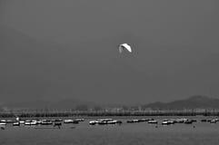 Garzette do Egret Foto de Stock Royalty Free