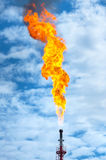 Gas flaring. Royalty Free Stock Photo
