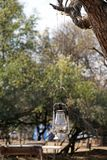 Gas lantern in a campground in Pilanesberg National Park. Gas lantern hanging from a tree in a campground in Pilanesberg National Park, near Sun City, South royalty free stock image