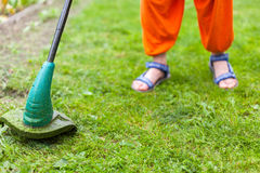 Gasoline lawn trimmer mows juicy green grass on a lawn on a sunny summer day. Close-up selective focus image. Garden equipment. Yo Stock Image