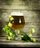 Gass холодного пива с хмелями Стоковая Фотография