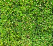 Gass artificial con el pequeño fondo de las flores Foto de archivo