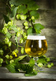 Gass of cold beer with hops Stock Photography