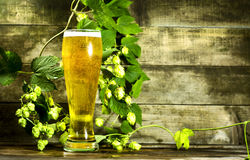 Gass of cold beer with hops Stock Photo