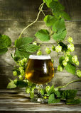 Gass of cold beer with hops Royalty Free Stock Images
