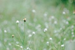 Grass flower background Stock Image