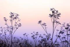 Gass på solnedgången arkivbilder