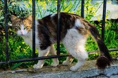 Gasse Cat Among The Fence Stockfoto