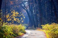 Gasse in den Herbst Stockbilder
