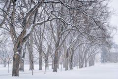 Gasse der alten Ulmebäume am Universitätsgelände Lizenzfreie Stockfotografie