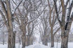 Gasse der alten Ulmebäume am Universitätsgelände Stockfotografie