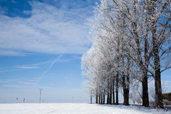 Gasse der Bäume Stockbilder