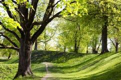 Gasse der Bäume im Frühjahr. Lizenzfreie Stockfotografie