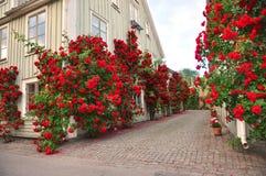 Gasse der Rosen Stockfotos