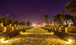 Gasse der Sphinxe in Luxor lizenzfreies stockbild