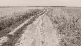 Gasse durch große Felder