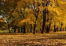Gasse in einem Herbstwald stockfotografie