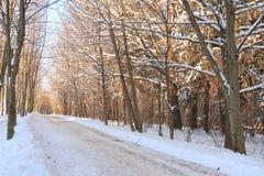 Gasse in einem Winterpark Lizenzfreie Stockbilder
