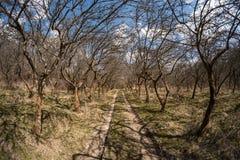 Gasse im alten Obstgarten Stockfotos