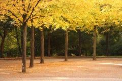Gasse im Fall umfaßt mit Blättern Stockfotos