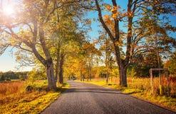 Gasse im Herbst lizenzfreie stockbilder