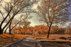Gasse im Herbstwald Stockfotografie