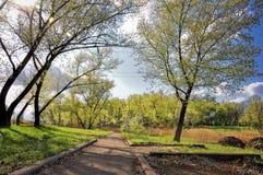 Gasse im Herbstwald Lizenzfreies Stockbild