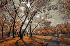 Gasse im Herbstwald Lizenzfreie Stockbilder