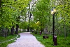Gasse im Park lizenzfreies stockfoto
