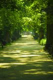Gasse im Park in der Sonne. Alley in the park in the sunshine among the trees stock photography