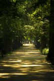 Gasse im Park in der Sonne. Alley in the park in the sunshine among the trees royalty free stock photo