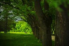 Gasse im Sommerwald Stockfotos