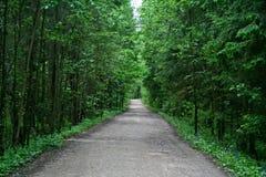 Gasse im Wald Stockfotografie