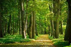 Gasse im Wald lizenzfreie stockbilder